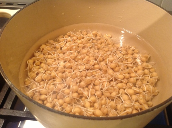 Simmering sprouted chickpeas